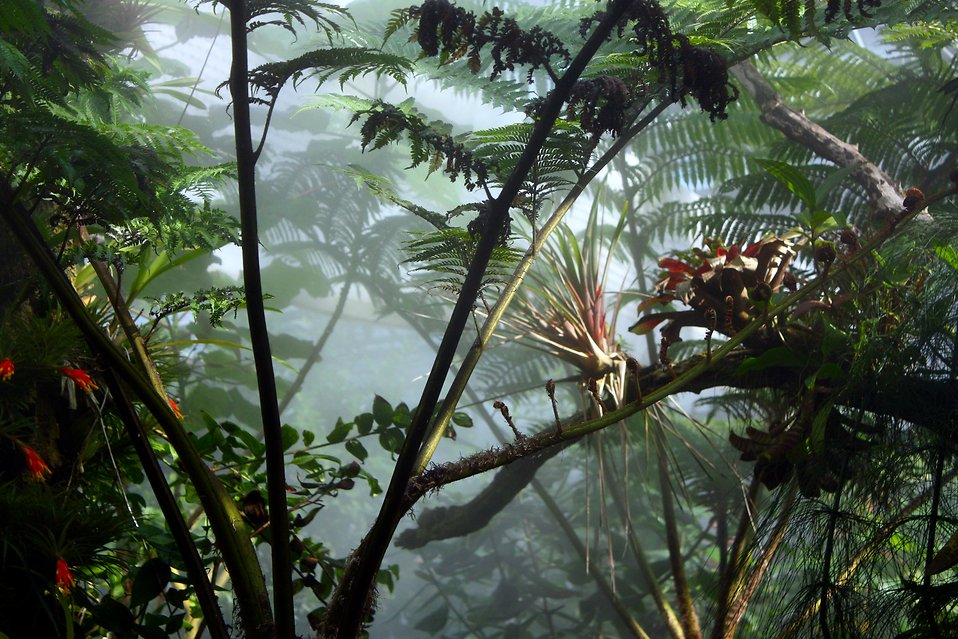 Tropical foliage surrounded by mist : Free Stock Photo