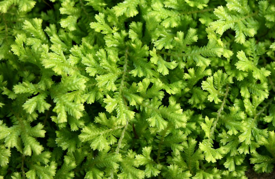Close-up of small green leaves : Free Stock Photo