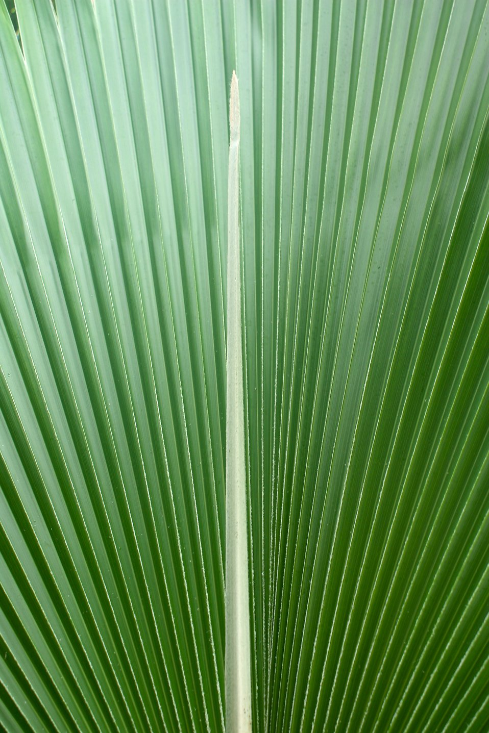 Close-up of a large green tropical leaf : Free Stock Photo