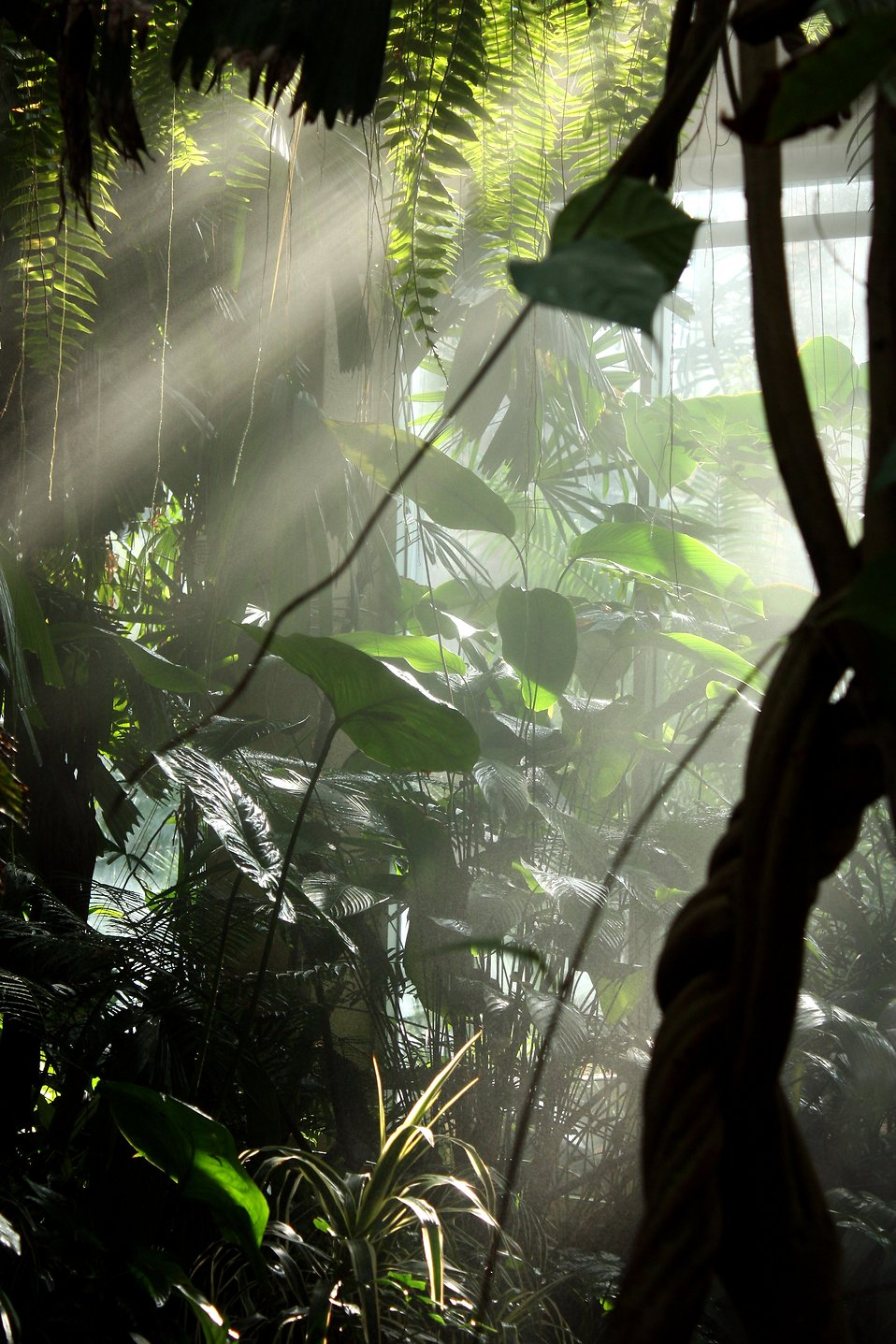 Sunlight shining through mist and tropical foliage : Free Stock Photo