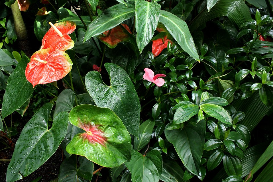 Tropical plants and flowers with water drops : Free Stock Photo
