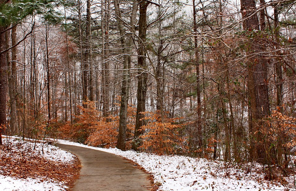 A curved path into snowy woods : Free Stock Photo
