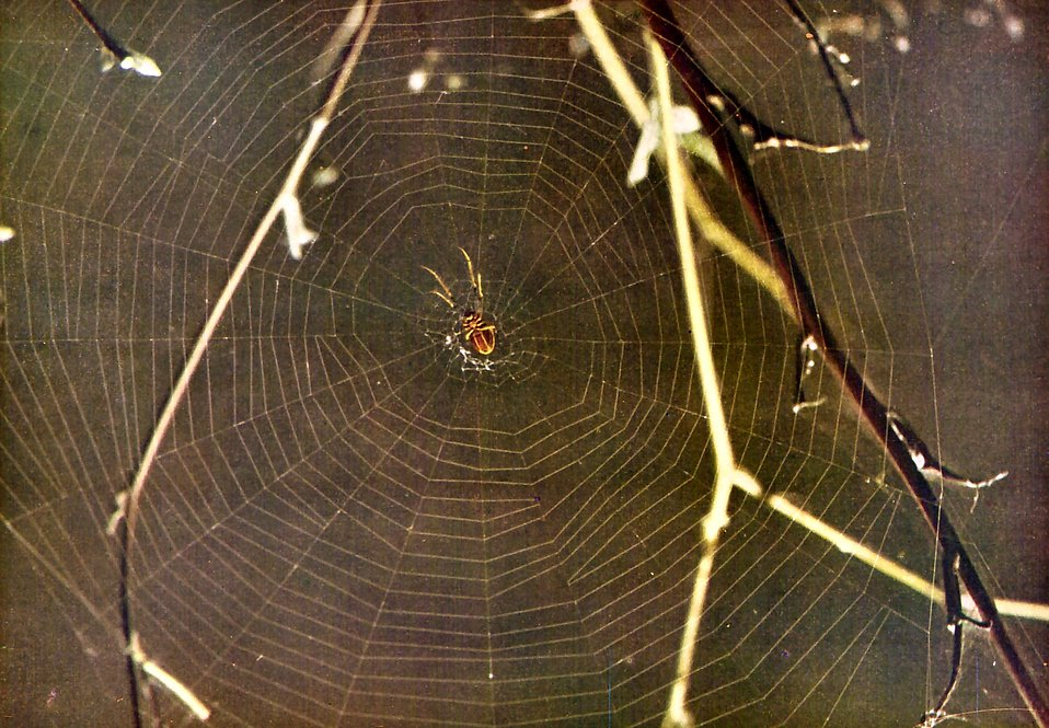 A spider in the center of a web : Free Stock Photo