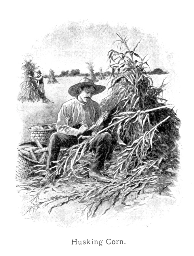Vintage illustration of a farmer husking corn : Free Stock Photo