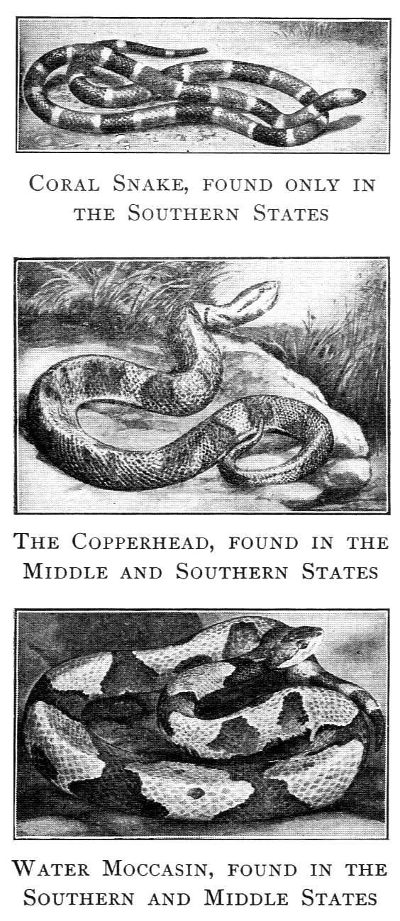 Vintage illustrations of various poisonous snakes : Free Stock Photo