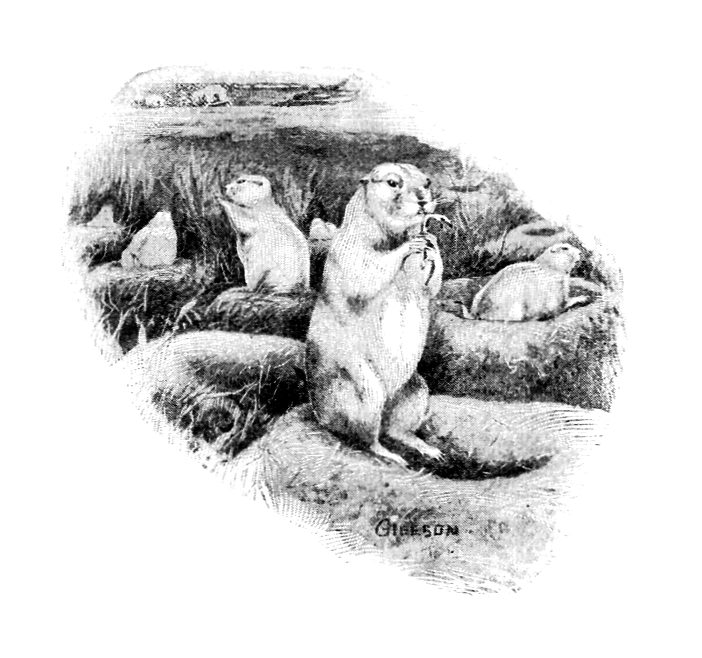 Vintage illustration of prairie dogs : Free Stock Photo