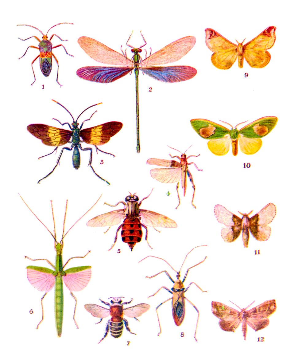 Various colorful insect illustrations isolated on a white background : Free Stock Photo
