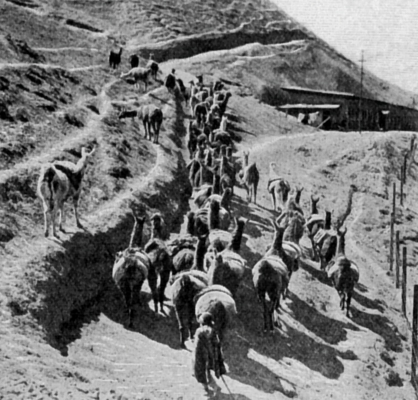 Vintage photo of llamas carrying ore from a mine : Free Stock Photo