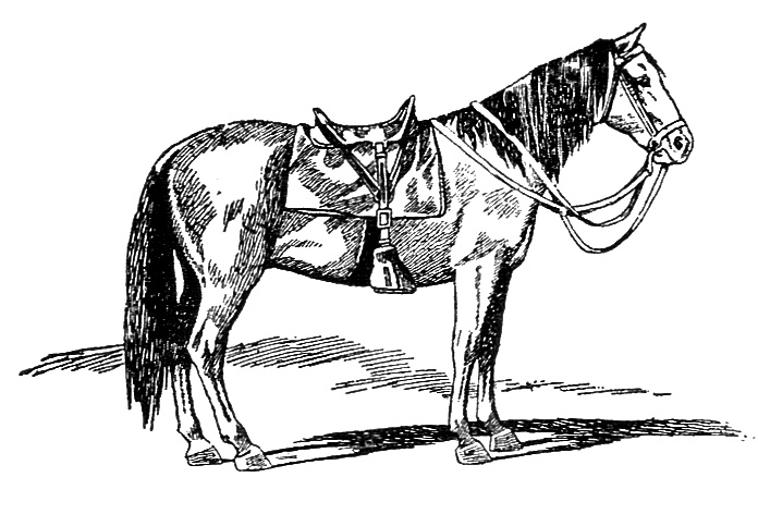 Vintage illustration of a horse : Free Stock Photo