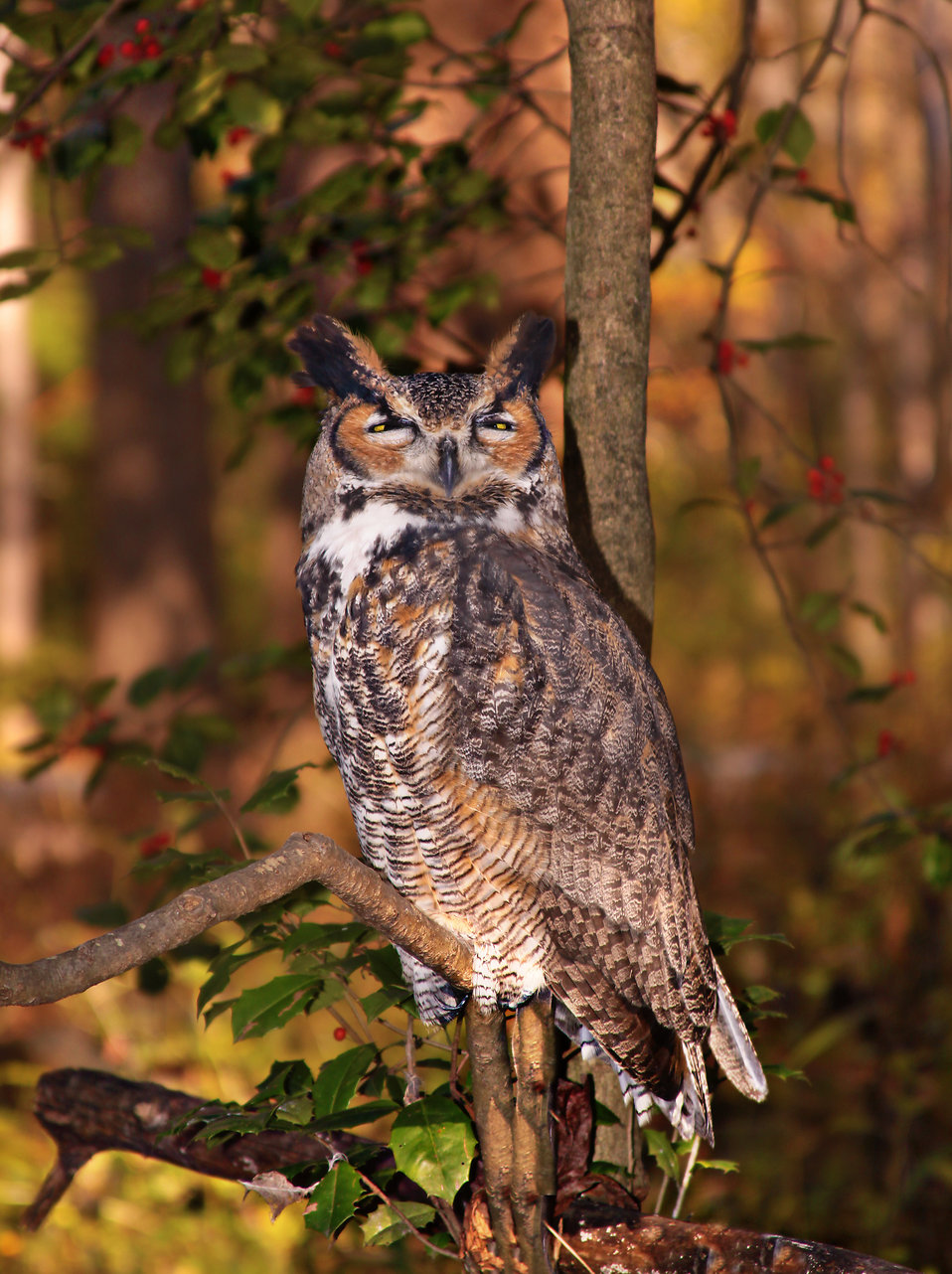 An owl sitting on a tree branch : Free Stock Photo