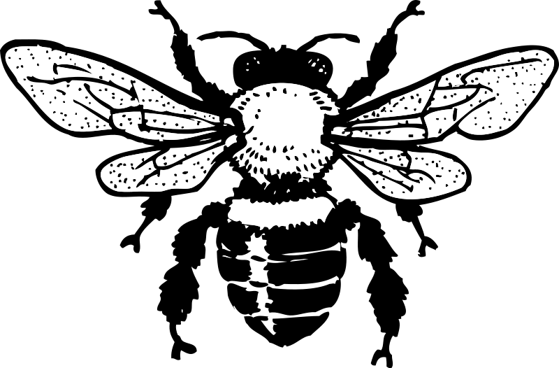 Illustration of a bee : Free Stock Photo