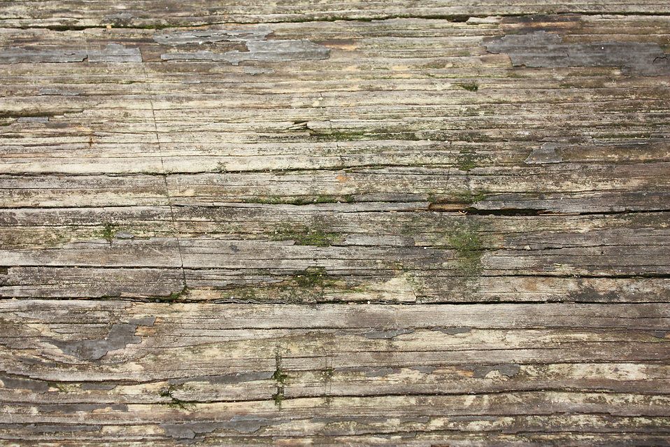 Close-up of wood grain with moss : Free Stock Photo
