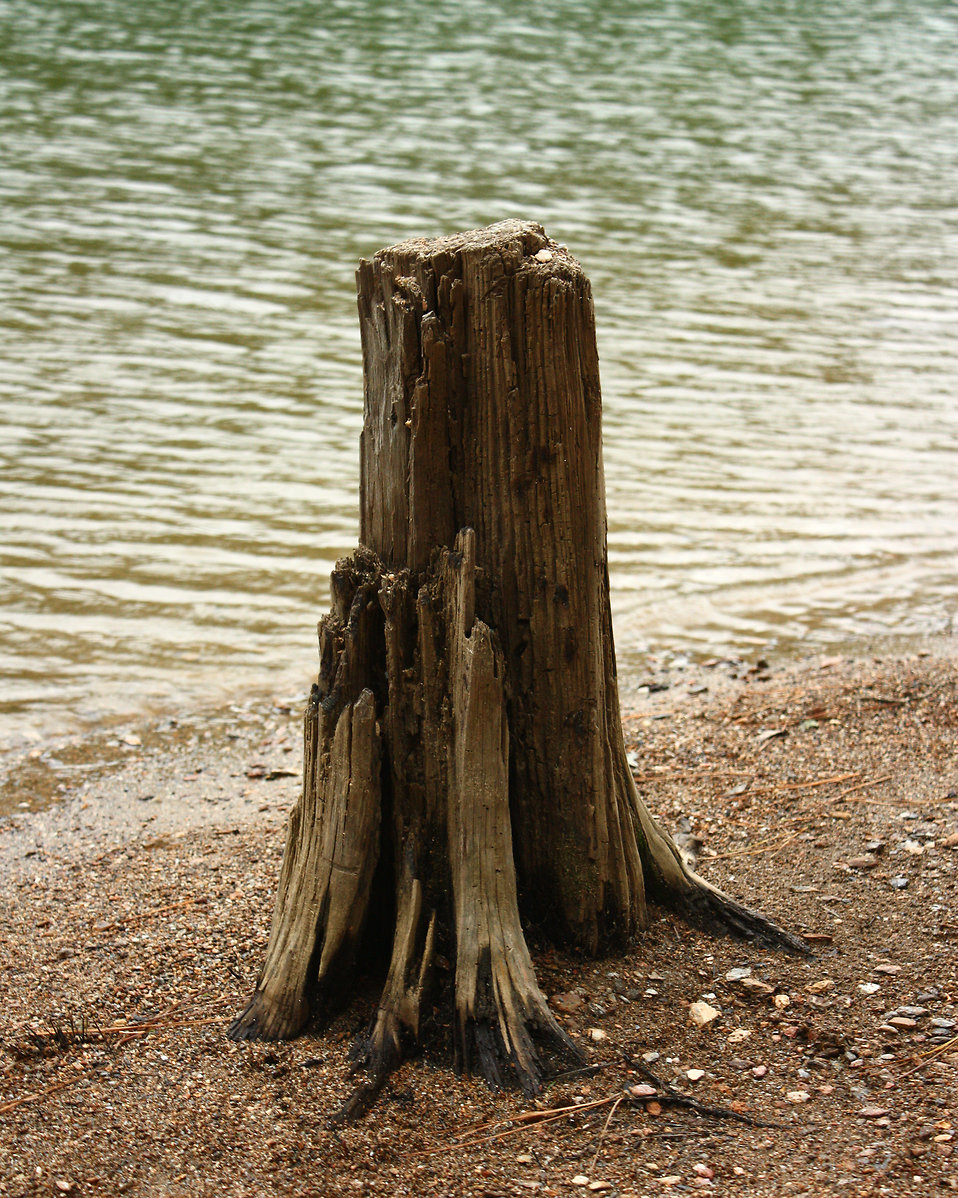 A tree stump on the shore of a lake : Free Stock Photo