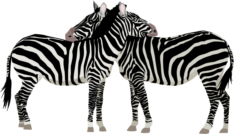 Illustration of zebras.