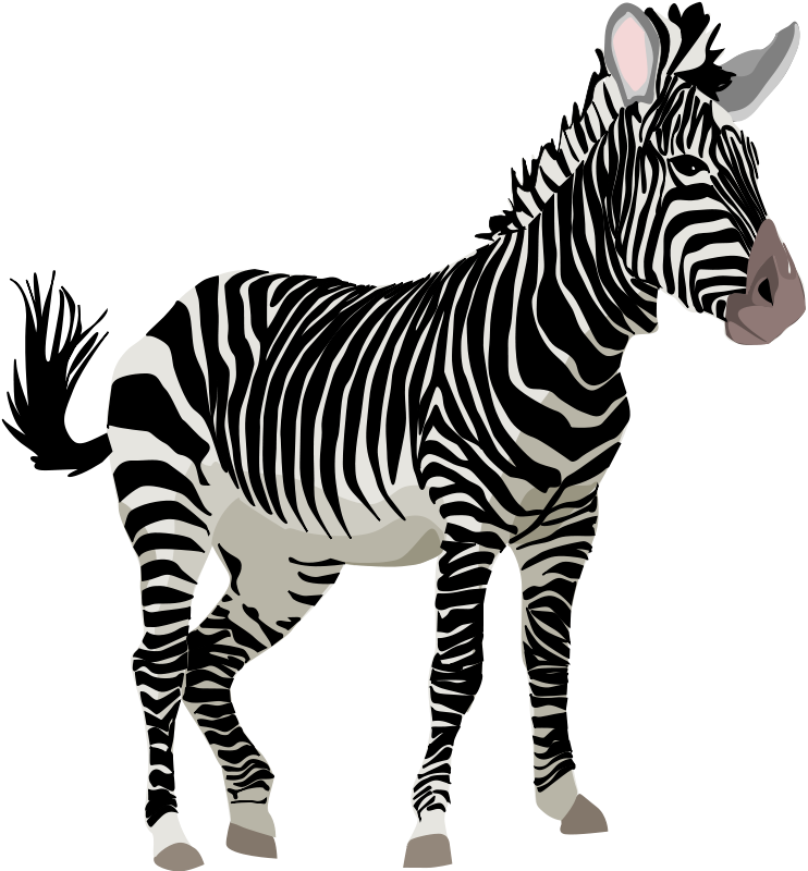 Illustration of a zebra : Free Stock Photo