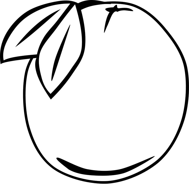 Illustration of an orange : Free Stock Photo