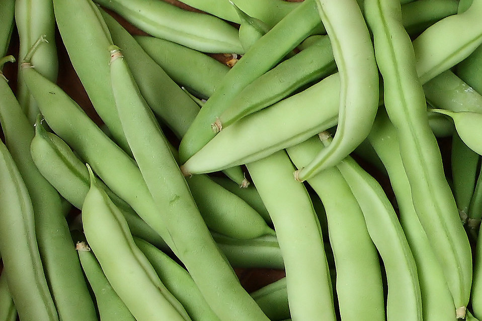 Close-up of freshly picked beans : Free Stock Photo