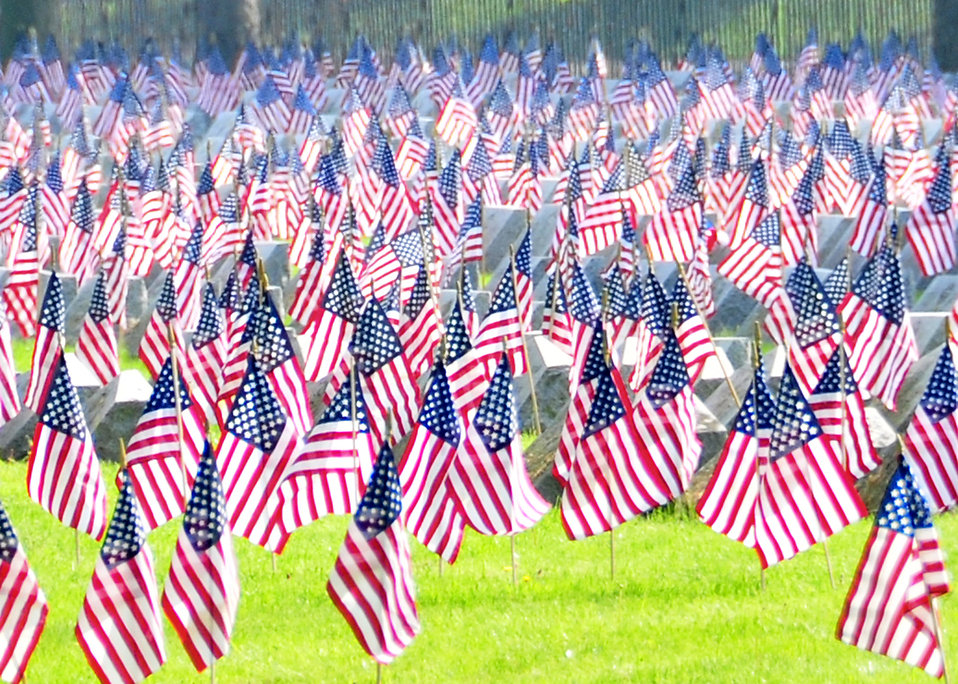 American flags in a cemetery : Free Stock Photo