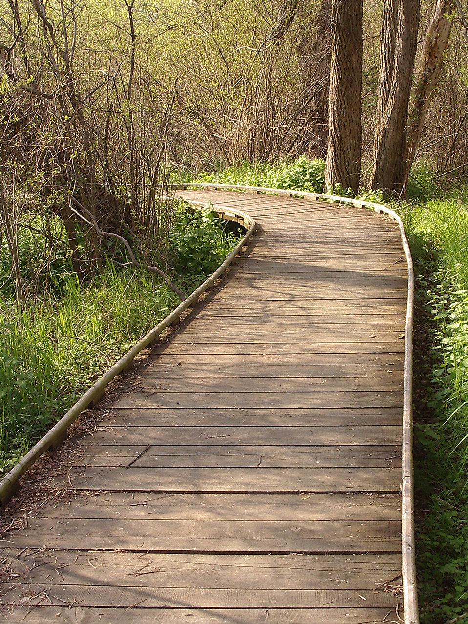 Boardwalk in the Forest : Free Stock Photo