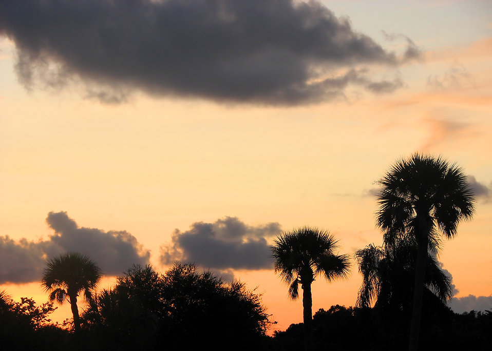 A sunset with palm tree silhouettes.