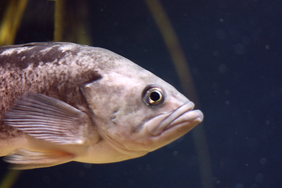 Close-up of a fish : Free Stock Photo
