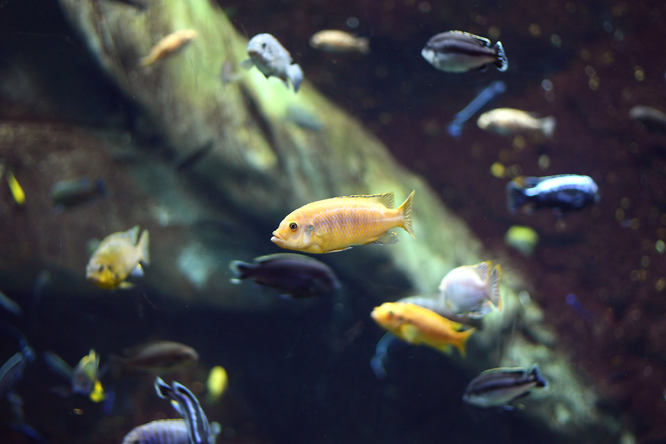 Fish free stock photo small tropical fish under water for Small tropical fish