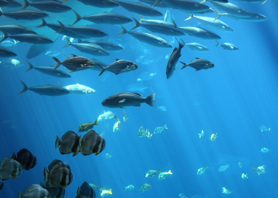 Schools of tropical fish swimming under water : Free Stock Photo