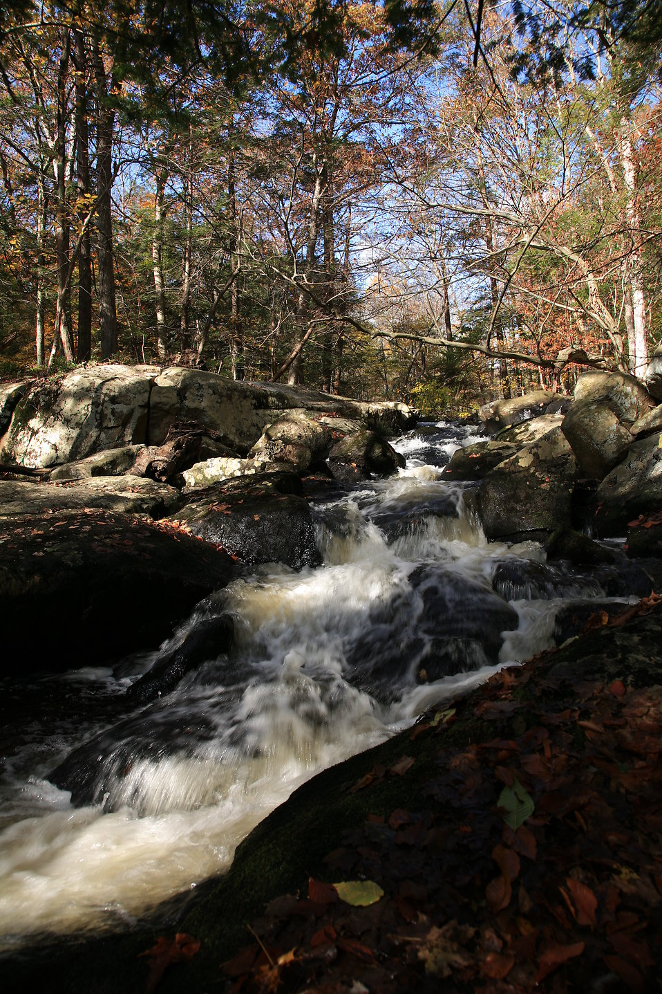A mountain stream on a fall day : Free Stock Photo