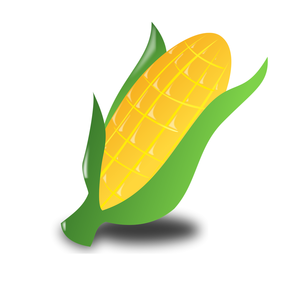 Illustration of an ear of corn on a transparent background.