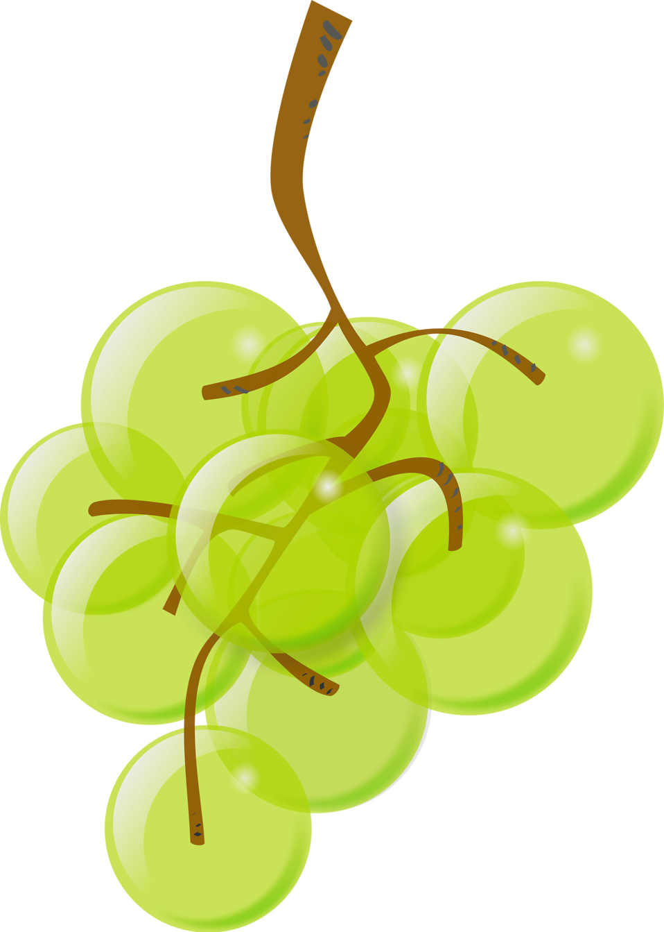 Illustration of a bunch of green grapes : Free Stock Photo