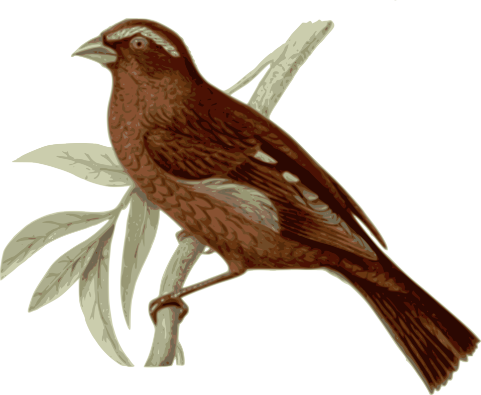 Illustration of a bird perched on a branch : Free Stock Photo
