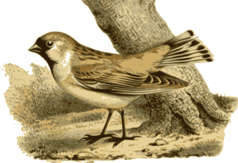 Illustration of a bird : Free Stock Photo