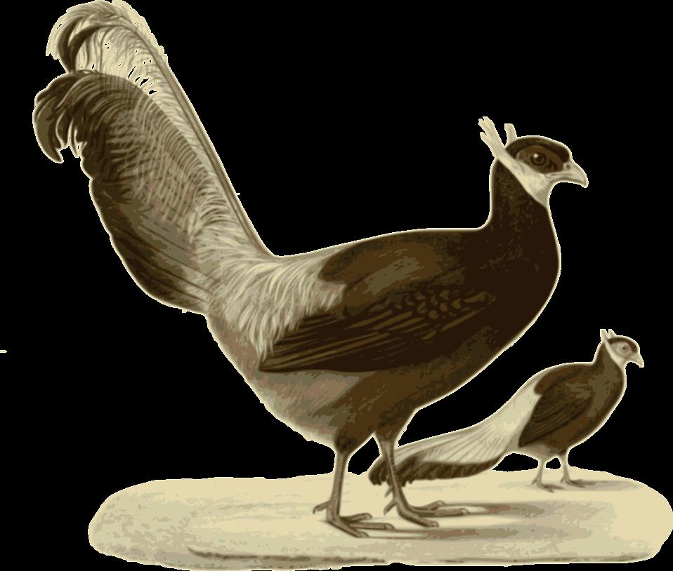 Illustration of a bird : Free Stock Photo