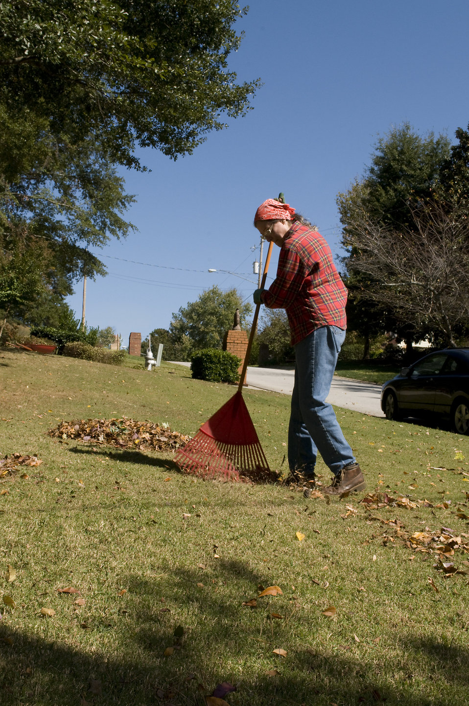 A woman raking leaves on her lawn : Free Stock Photo