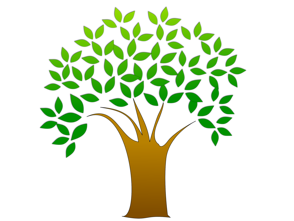 Illustration of a tree with leaves with a transparent background.