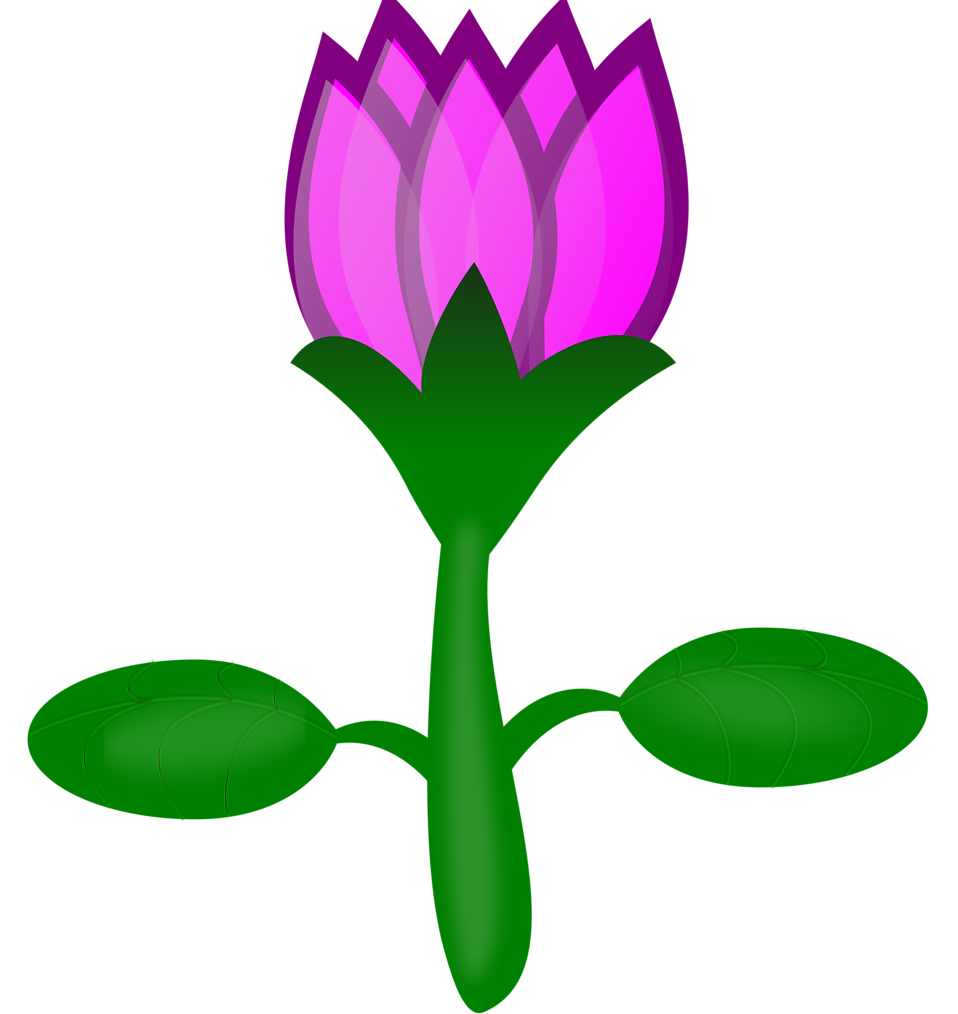 Illustration of a pink lotus flower : Free Stock Photo