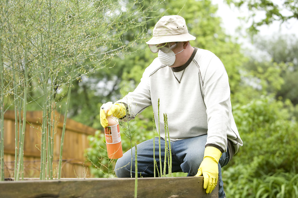 Pesticide free stock photo a man spraying a pesticide for Garden pesticides