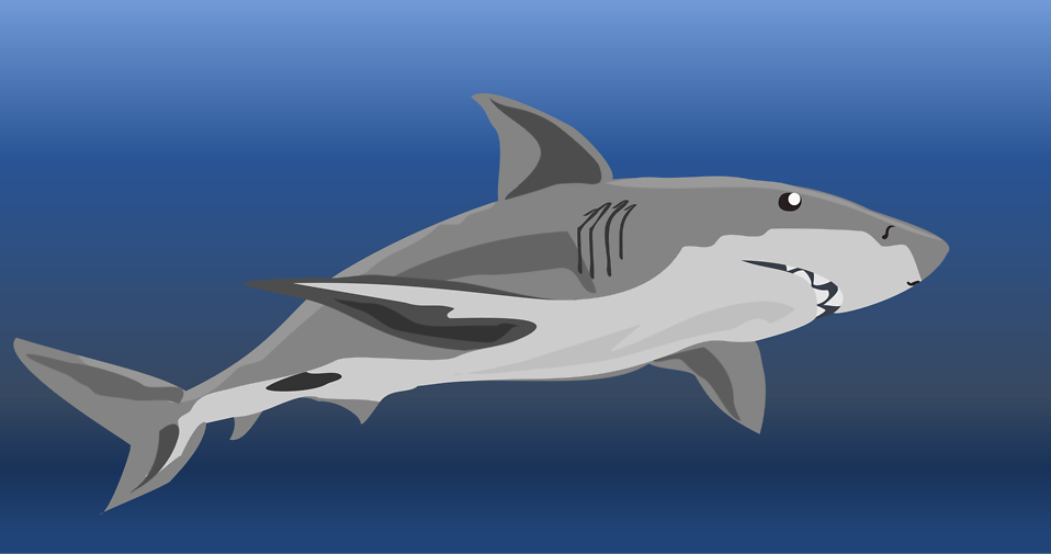 Illustration of a shark : Free Stock Photo