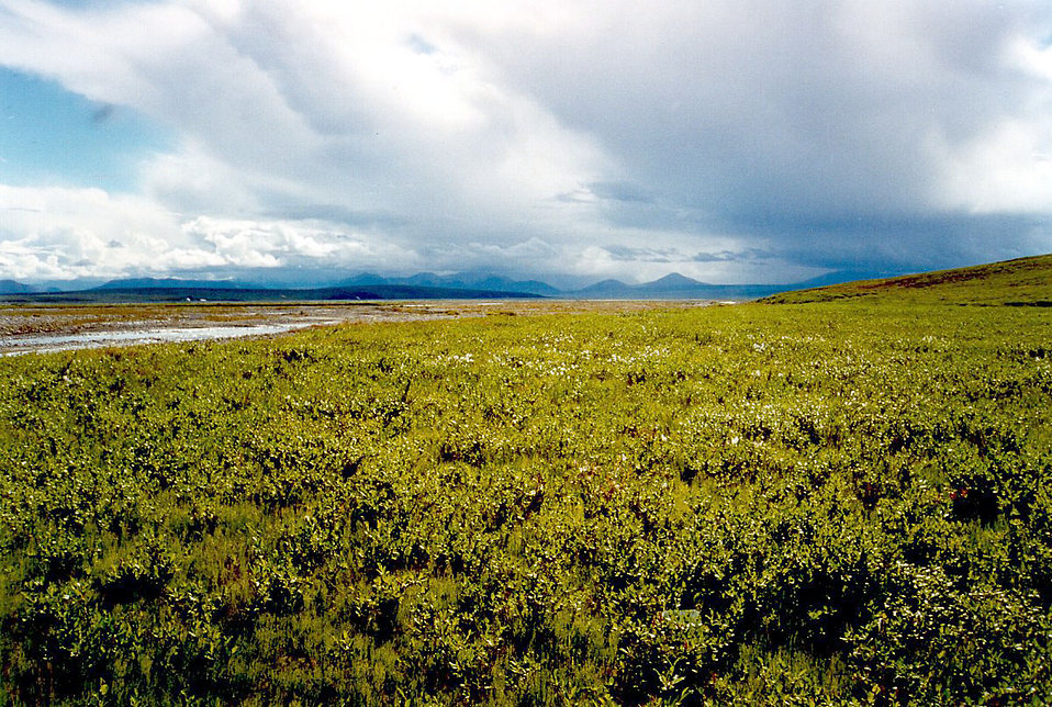 A coastal arctic tundra : Free Stock Photo