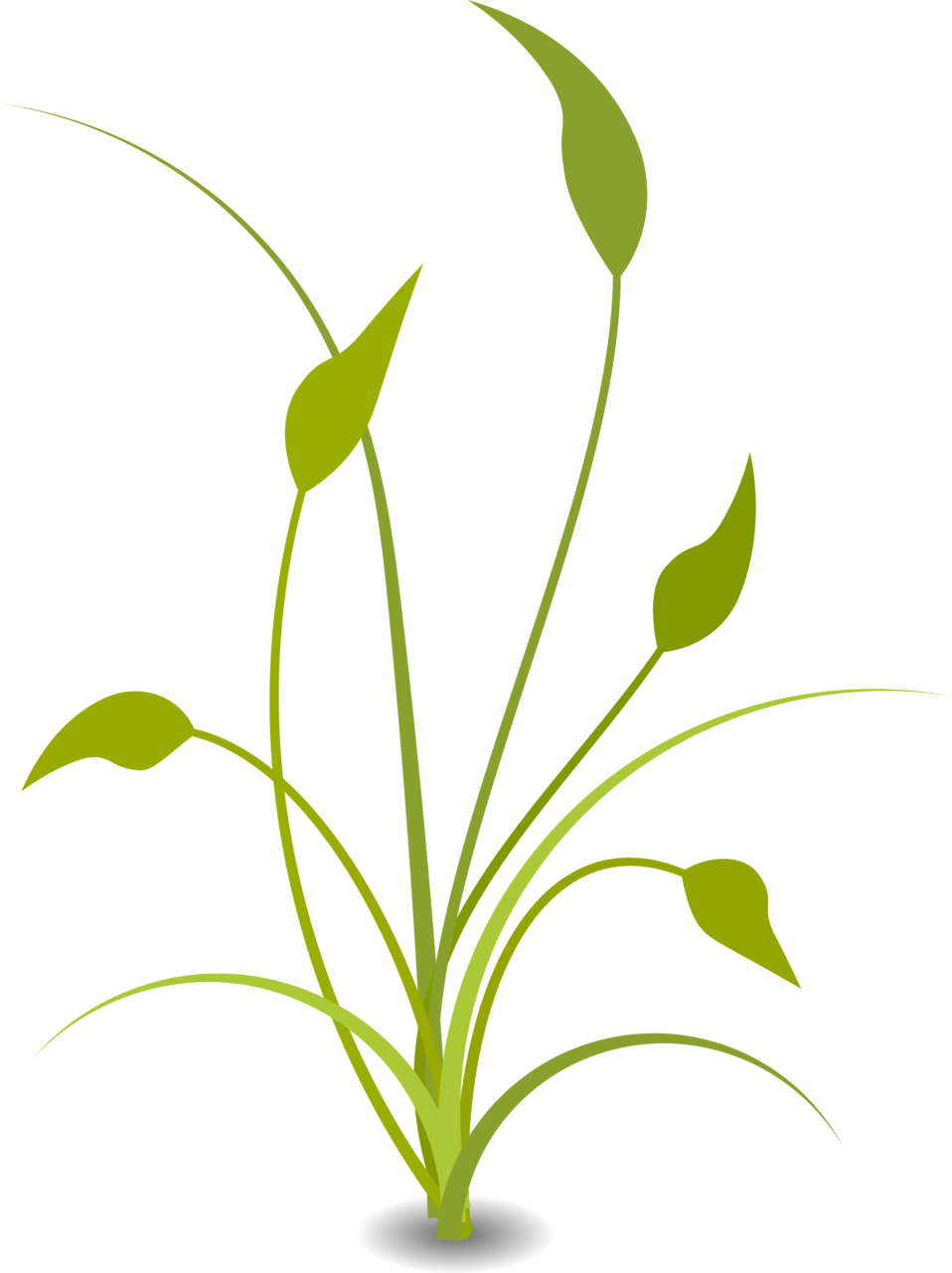 Illustration of a green plant : Free Stock Photo