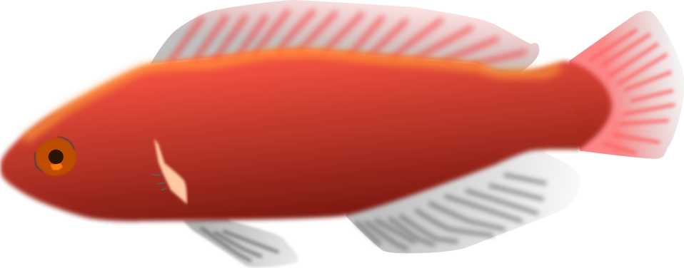 Illustration of a red fish : Free Stock Photo