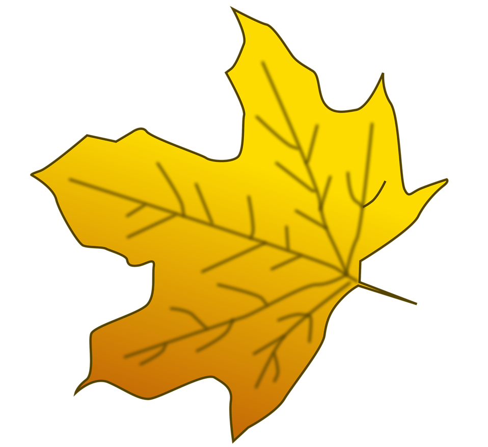Illustration of a yellow autumn leaf : Free Stock Photo