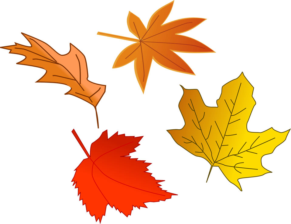 Illustration of colorful autumn leaves : Free Stock Photo