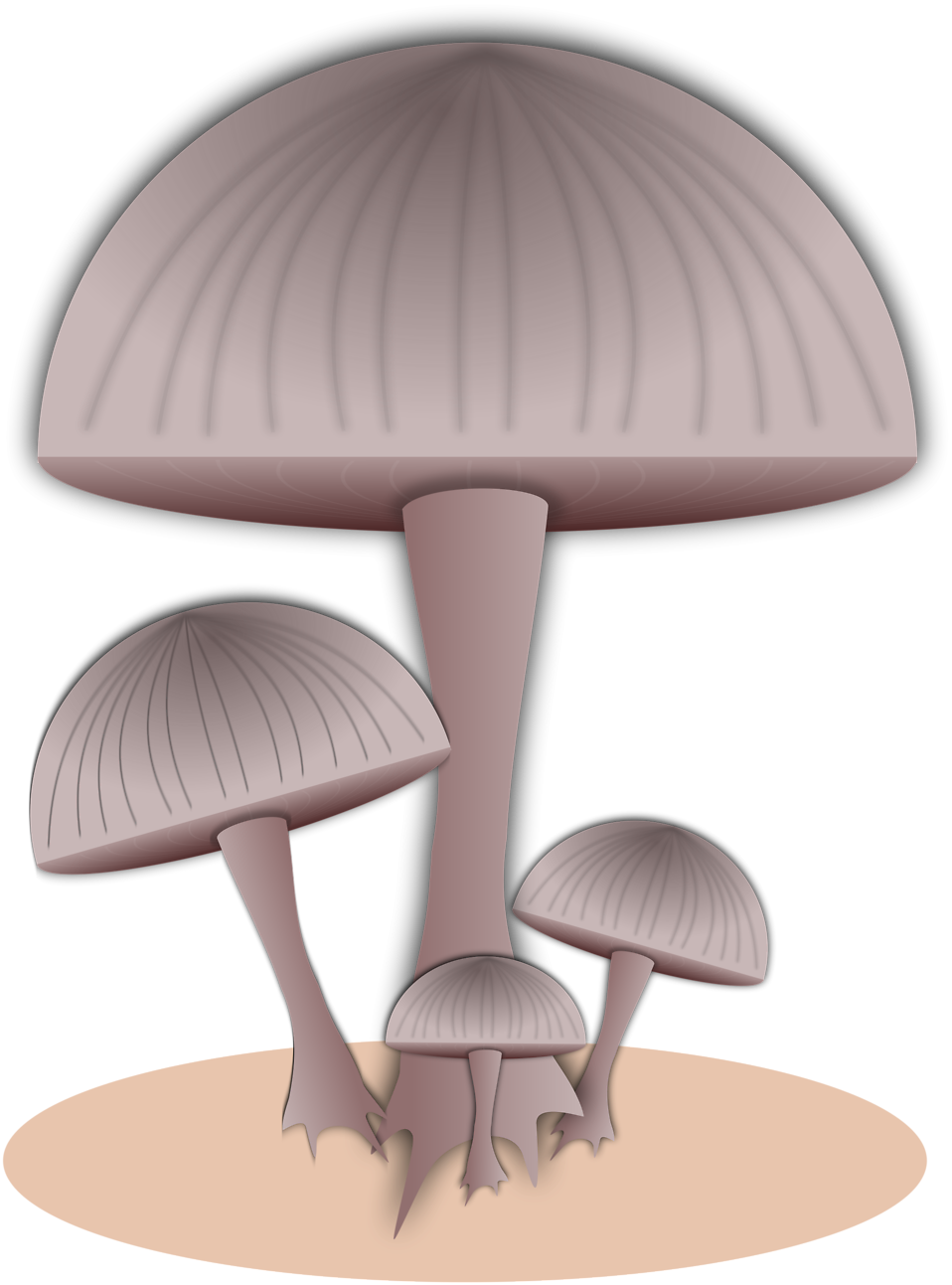 Illustration of capped mushrooms : Free Stock Photo