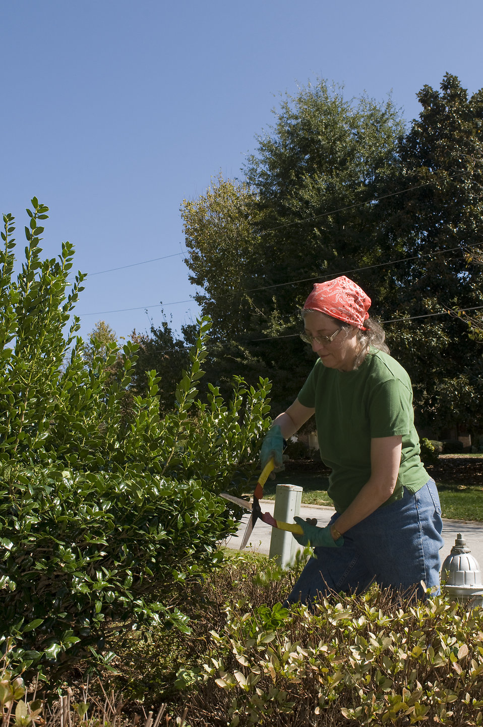 Gardening Free Stock Photo A Woman Doing Yardwork