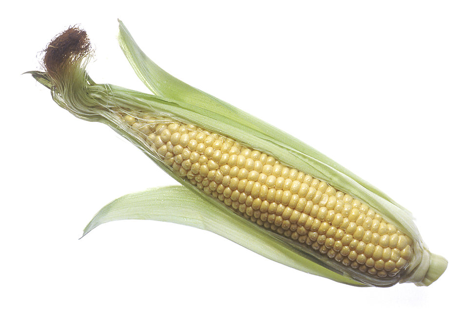 An ear of raw corn : Free Stock Photo