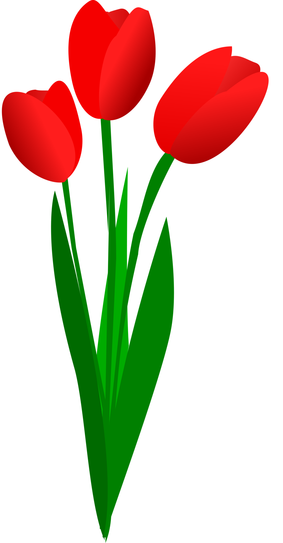 Illustration of red tulips with a transparent background.