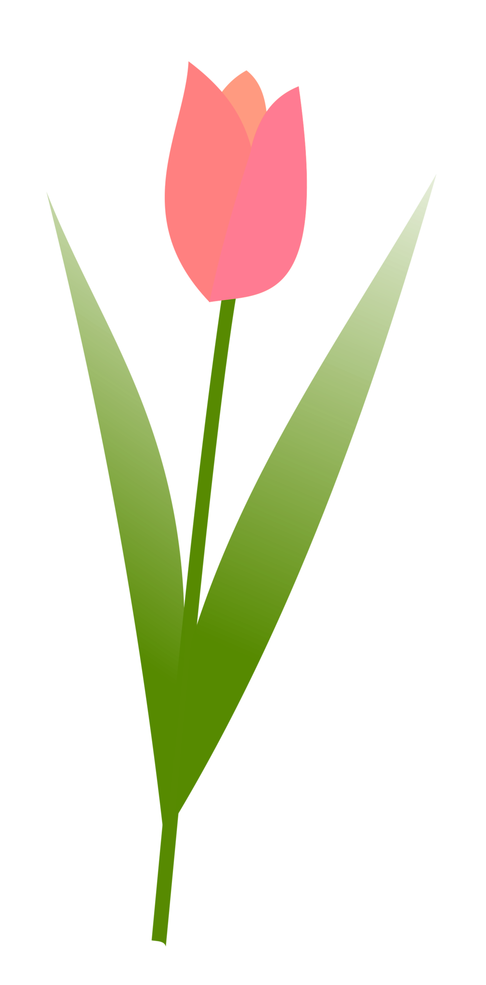 Illustration of a pink tulip with a transparent background.