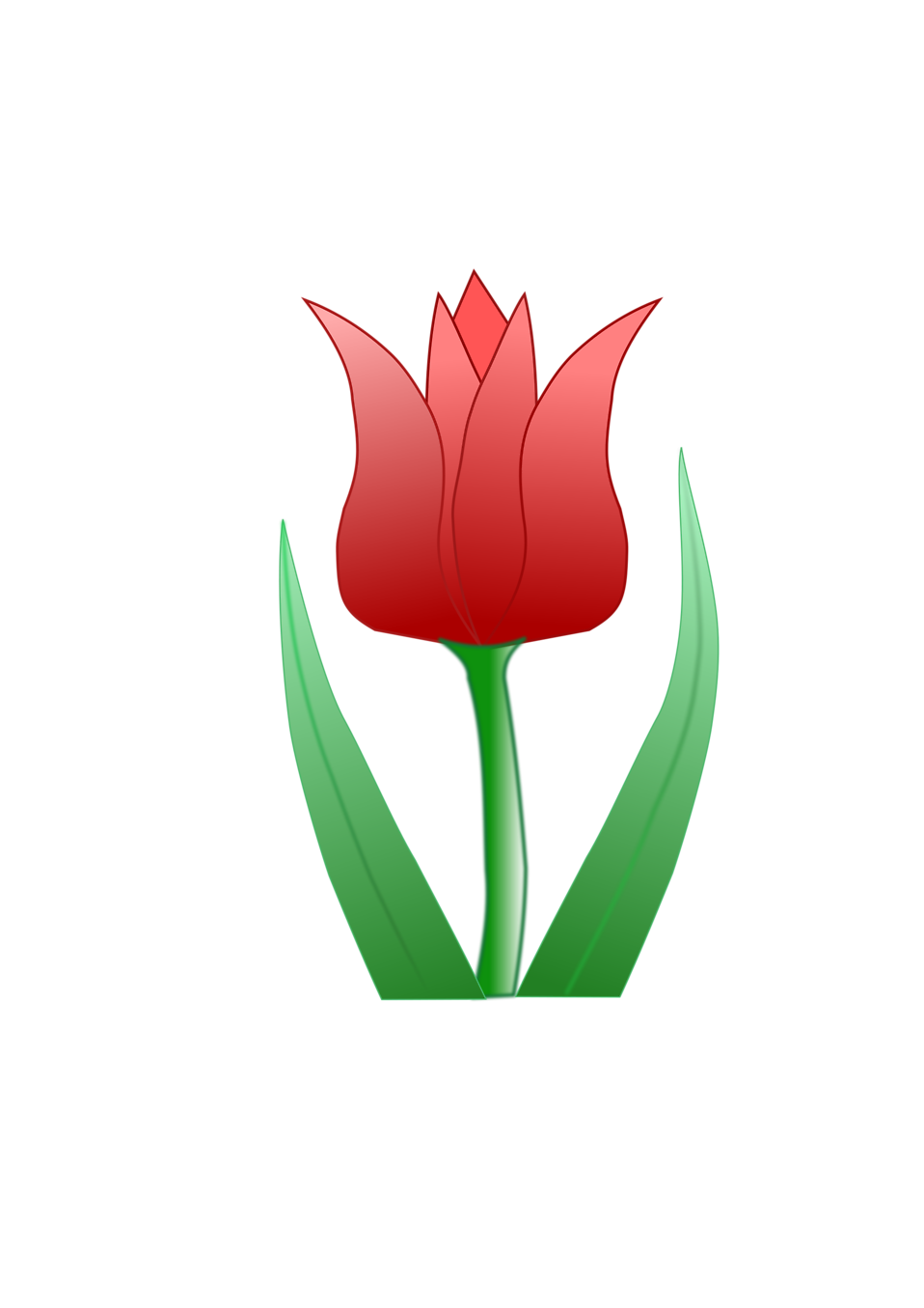 Illustration of a pink tulip : Free Stock Photo