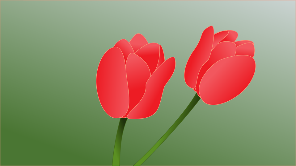 Illustration of pink tulips : Free Stock Photo